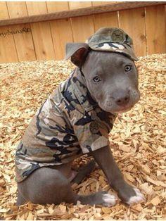 Army puppy