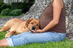 Maternity Session with a dog   Los Angeles Maternity Photographer, Los Angeles Pet Photographer,  Pasadena Maternity Photography, Pasadena Pet Photography, Cathy Murai Photography