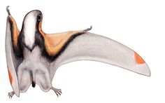 Dendrorhynchoides curvidentatus, D. mutoudengensis   A Dinosaur A Day