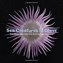 Sea Creatures in Glass: The Blaschka Marine Animals at Harvard by Elizabeth R. Brill, available at Book Depository with free delivery worldwide. Glass Showcase, Sea Anemone, Sea Slug, Glass Animals, My Glass, Zoology, What To Read, Marine Life, Sea Creatures