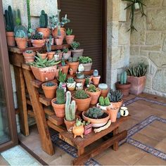 55 Easy DIY Succulents Mini Garden Ideas These trendy Succulents ideas would gain you amazing compliments. Succulent Gardening, Cacti And Succulents, Planting Succulents, Cactus Plants, Garden Plants, Indoor Plants, House Plants, Planting Flowers, Succulent Garden Ideas