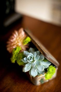 tiny succulent in tin box, very cute