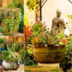 Patti Brisebois' Manitoba zone 3 garden.Succulents are this gardener's  passion. The colours and textures are breathtaking.