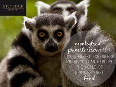 Garden Route | Monkey Land Primate Sanctuary