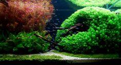 Amano Aquascape - Bing Images