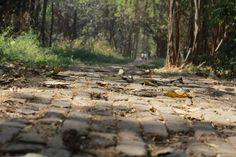 Ady Endre: A föl-földobott kő