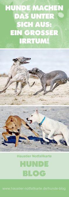 Hunde machen das unter sich aus: ein großer Irrtum! Jetzt im Haustier Notfallkarte Hunde Blog! #haustier #notfallkarte #hunde #blog