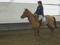 When I was at a show my pony stopped at the jump put up his leg... Knocked the pole over and then walked over it like nothing ever happened.