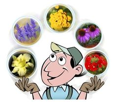 perennials for year-round variety - check out my gardening blog  gardening-blog.org