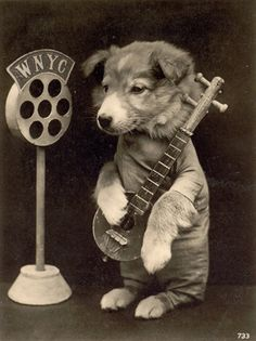 Rolf, the mandolin-playing terrier, was regularly featured on Art Nudnick's Musical Menagerie. The Sunday afternoon variety programme was a hit on WYNC in 1925. (This picture was sent to me by Andy Lanset who helps look after the WNYC archives in New York  www.wnyc.org