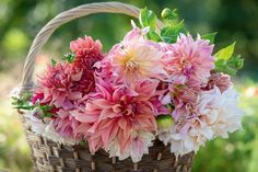 Money off Sarah Raven dahlias - Gardens Illustrated Most Beautiful Gardens, World's Most Beautiful, Flower Bouquets, Rose Cottage, Dahlias, Cut Flowers, My Coffee, Garden Inspiration, Garden Plants