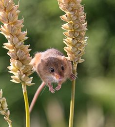 Cute Baby Animals, Animals And Pets, Funny Animals, Study Help, Rats, Beautiful Creatures, Cute Babies, Bible, Random