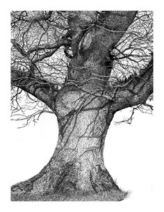 Oak – Touch me card Code 115 — Sarah Woolfenden A close view of the bark on a huge, old oak tree on a sunny day Oak Tree Drawings, Ink Pen Drawings, Tree Illustration, Illustrations, Old Oak Tree, House Drawing, Landscape Drawings, Tree Print, Botanical Art