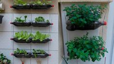 Planting in hanging bottles on wall - Organic Vertical Garden DIY Ficus, Natural, Vegetables, Plants, Youtube, Gardening, Watch, Videos, Blog