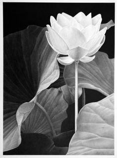 "Saatchi Art Artist Dietrich Moravec; Drawing, ""Zum Licht"" #art Buy Paintings Online, Online Painting, Pencil Drawings Of Flowers, Drawing Flowers, Graphite Drawings, Botanical Art, Colored Pencils, Flower Art, Saatchi Art"