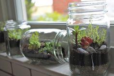 Terrarium Ideas and Inspiration {Easy DIY Ideas for Indoor Gardens} - bystephanielynn Terrarium Diy, Mason Jar Terrarium, Mason Jar Diy, Terra Gardens, Pot Plante, Bottle Garden, Jam Jar, Recycled Glass, Glass Jars