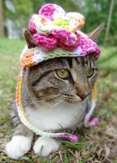 Funny Hats made for your Cat - Slide 8