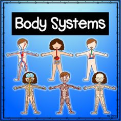 This product is a great way to introduce the body systems to your class! This unit includes the following body systems: *circulatory system *digestive system *muscular system *nervous system *respiratory system *skeletal system *6 colored boy posters for