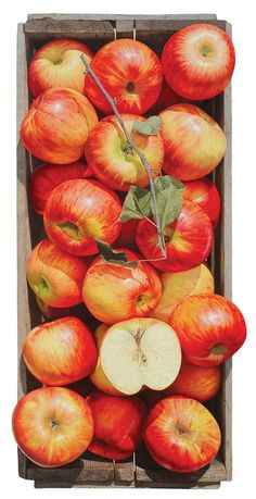 National Geographic, 129x110cm Apple, 57.5x53.5cm, 120x110cm, F.R.P, Urethane Painting, 2010 가을향기, 226.1x210cm, Oil on Canvas, 2010 탐스러운 상자, 224x20