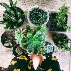 Interior goals this spring/summer/fall: to get my home filled w/ minimal-maintenance greenery. Bonsai, Plant Aesthetic, Aesthetic Green, Plants Are Friends, Bloom Where You Are Planted, Cactus Flower, Small Cactus, Nature Plants, Cactus Y Suculentas