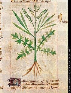 tractatus de herbis, Modena - Szukaj w Google