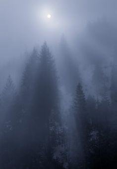 Infinite sky above the fluffy white; tall trees captivating light.