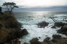 Saw this when we traveled in California - the scraggly Lone Cypress  in Pebble Beach, Monterey Peninsula, isn't a particularly large tree. It makes up for its small size, with its iconic status as the beautiful tree in splendid isolation, framed by  the Pacific Ocean.