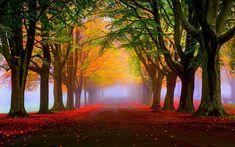 Renatures.com - Trees Autumn Park Road Fall Grass Benches Fog Leaves Wallpaper For Desktop
