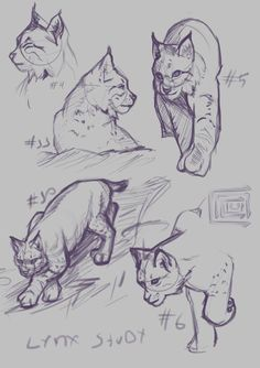 Lynx practice 1 by Cacuu on DeviantArt Cat Drawing, Drawing Sketches, Cartoon Drawings, Animal Drawings, Lynx Lynx, Learn To Sketch, Nature Sketch, Sailor Moon Character, Character Design Animation
