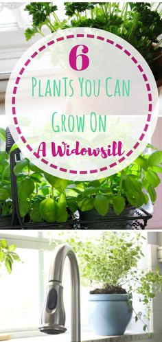 Easy plants to grow on your windowsills. Indoor gardening is really easy, and really fun! Every kitchen needs a garden!