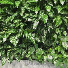 Instalace Vertikálních zahrad Gro-Wall® | Tabu Group s.r.o. Kladno Parsley, Spinach, Herbs, Group, Vegetables, Wall, Plants, Herb, Vegetable Recipes