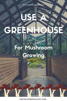 How To Use A Greenhouse For Mushroom Growing ? Everyone knows that mushroom growing needs dark, moist area . that is sufficiently moist and dark in greenhouse. Growing Mushrooms, Being Used, Stuffed Mushrooms, Gardening, Tips, Stuff Mushrooms, Lawn And Garden, Horticulture, Counseling