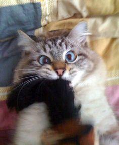 ...cat goes berserk...!