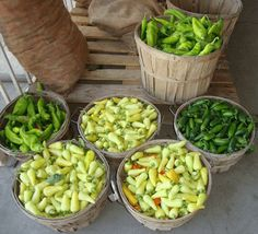 Green Chile List - Mild to Hot – Sandia Seed Company Pepper Plants, Pepper Seeds, Stuffed Hot Peppers, Pasta Salad, Chile, Eat, Ethnic Recipes, Green, Food