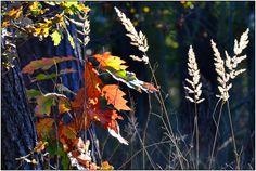 Herbstfarben von Hans R. Wolters