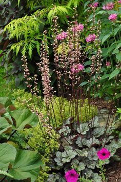 Ligularia on the lower left, with a blooming Heuchera on the lower right, and Lady's Mantel is the lime colored flower just behind it.