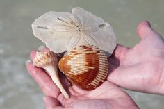 Fun and Easy Tips for Cleaning Seashells- Find some tips of how to remove the smell of theses little bits♡