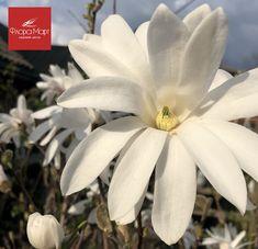 😍🌺🌳 Flora, Garden, Plants, Garten, Gardens, Planters, Tuin, Plant, Planting