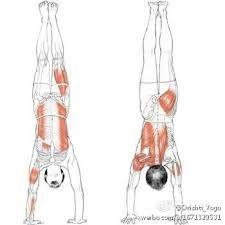 adho mukha vrksasana Yoga Anatomy, Asana, Plant Hanger, Gladiator Sandals, Lace Up, Flats, Art, Fashion, Loafers & Slip Ons