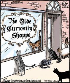 cats and curiosity - Bizarro by Dan Piraro. May 25, 2010