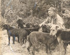 Henry Vaughn 'Von' Plott with Plott Hounds AND AN AIREDALE!!. Haywood County Public Library.