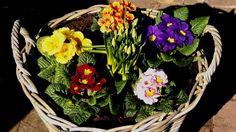 Früüüühling !! ... Und es soll immer wärmer werden in den nächsten Tagen. Da hält es alle Gartenfreunde wohl nicht mehr auf dem Sofa. Nicht nur im Saarland. :-)