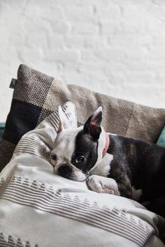 Skandinavisk oas hos entreprenören i Brooklyn Boston Terrier Dog, Terrier Dogs, Carolina Herrera, Elle Decor, Paris, Brooklyn, Animals, Hygge, Decoration
