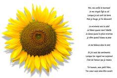 77 Meilleures Images Du Tableau Tournesols Sunflowers Beautiful