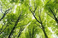 Bright Green Canopy Forest Wallpaper Wall Mural | MuralsWallpaper.co.uk