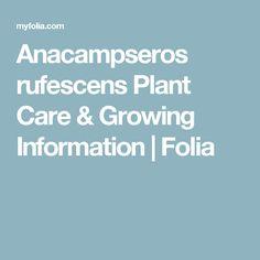 Anacampseros rufescens Plant Care & Growing Information | Folia