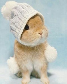 Omg! This is so cute I could die!