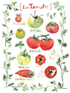 Kitchen art print, Tomato varieties poster with leaf border, 11X14, Watercolor vegetable painting, Red and green kitchen wall decor. $40.00, via Etsy.