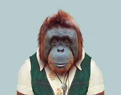 Bornean-Orangutan---Pongo-Pygmaeus-copia