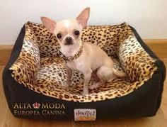Chi in animal print bed
